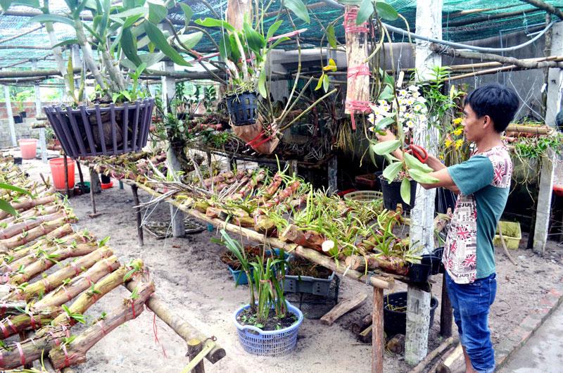 cắt tỉa để chăm sóc hoa lan