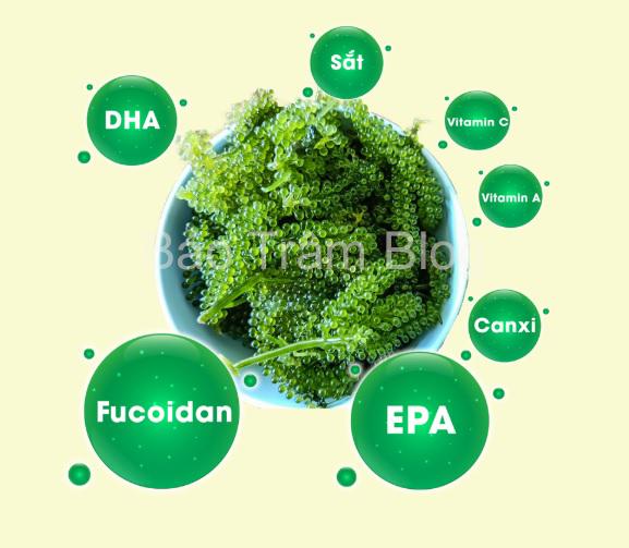 thành phần dinh dưỡng trong rong nho sabudo